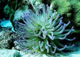 Anemone 10 English Words Even Native Speakers Find Difficult to Pronounce