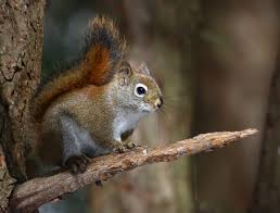 Squirrel 10 English Words Even Native Speakers Find Difficult to Pronounce